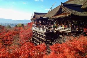 日本-日本【當地玩樂】京都嵐山+清水寺+伏見稻荷大社+嵯峨野觀光小火車一日游