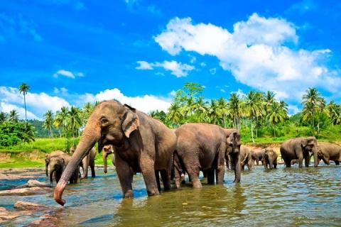 【頌·博覽】斯里蘭卡9天*全景之旅*純玩<4晚超豪華酒店,徒步天堂埃勒小亞當峰,吉普車游國家公園,升級海鮮餐>