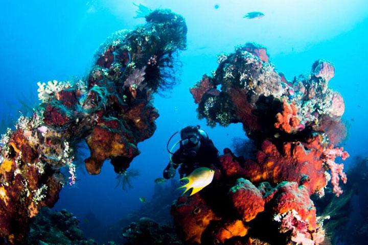 【持证潜水】巴厘岛5天*图兰奔Fun Dive 9潜*广州往返*等待确认<世界五十大潜水胜地之一>