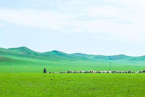 【誉·深度】呼和浩特、鄂尔多斯、双飞4天*敕勒川草原广之旅牧场*响沙湾<五星级自助晚餐,骑骆驼>