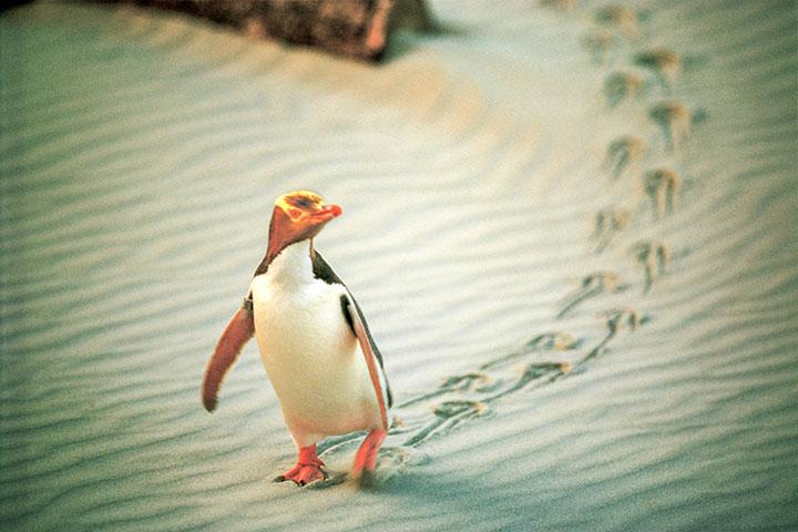 【颂·深度】新西兰南岛11天*醇酒佳肴*纯玩<峡湾海鲜船,汉默温泉,观景火车>