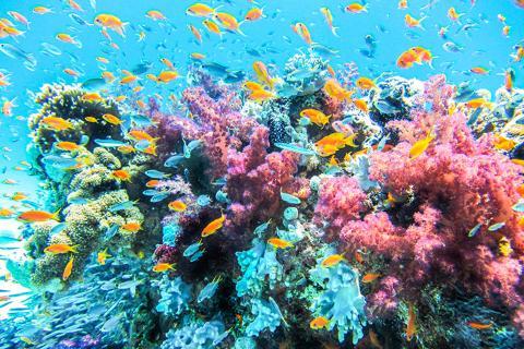 【海岛游】美娜多5天*浮潜火山<豪华酒店,布纳肯出海浮潜,MAHAWU火山,火山花园餐厅,五色湖>