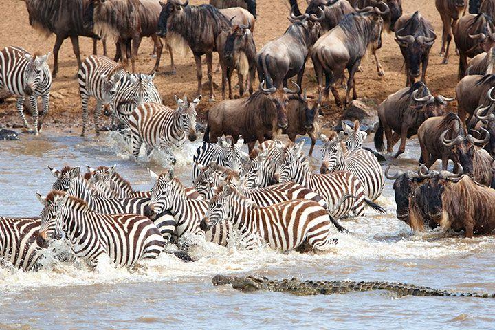 【典·猎奇】肯尼亚8天*动物追踪*广州往返<马赛马拉国家公园动物追踪,阿布戴尔丛林徒步,地球遗址东非大裂谷>