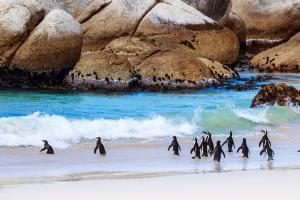 【典·深度】南非8天*经典体验*基础版<比林斯堡公园动物追踪,太阳城观光,观海豹赏企鹅,品尝特色葡萄酒,信号山俯瞰美景>
