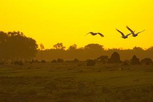 【慢享·自由行】澳洲北領地5天*達爾文連住4晚*李治菲特國家公園*卡卡杜國家公園<機票+酒店+3日活動,2人起行>