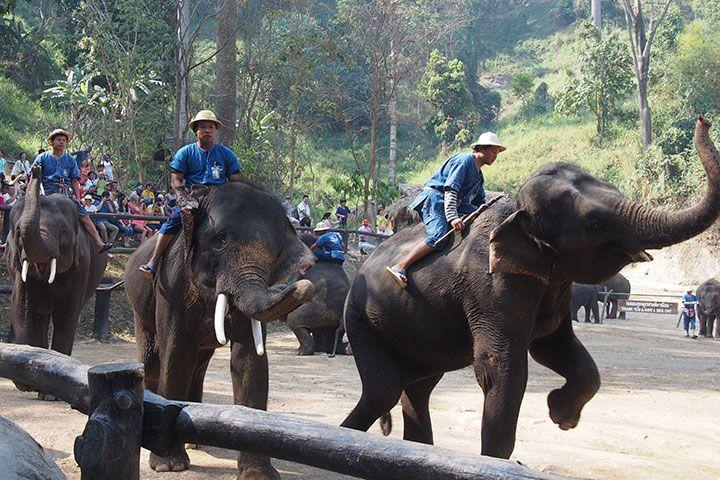 【当地玩乐】泰国普吉1天*卡马拉大象营ATV30分钟+骑象30分钟+接送*等待确认