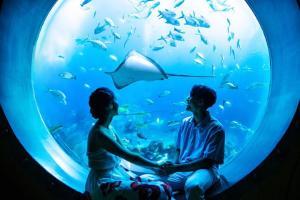 亚特兰蒂斯失落的空间水族馆门票