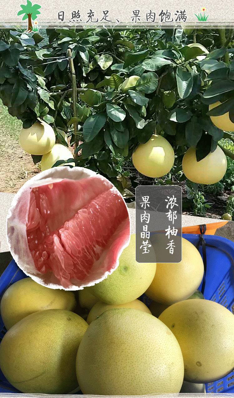 柚子_03.png