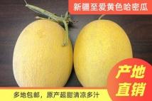 【新疆海峡】新疆至爱黄色哈密瓜(2-3个)(全国包邮)
