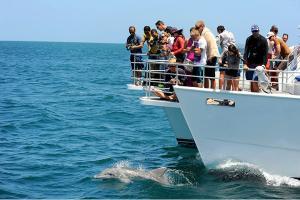 【頌·智趣營】澳洲經典名城9天*萌物總動員*農莊體驗*純玩<喂野生海豚,抱抱考拉,模擬小小舵手>