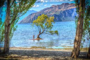 【当地玩乐】新西兰南岛冰川6日游<毛利战舞、直升机俯瞰冰川、孤树湖景>逢周一出发*等待确认