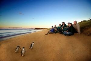 【當地玩樂】澳大利亞*墨爾本蒸汽火車+企鵝島一日游(大團)*等待確認