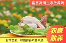 盈香生态放养鸡*2只